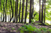 Detail of green forest — Stock Photo