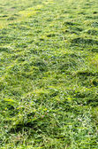 Meadow mowed for hay — Stock Photo