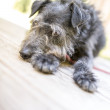 Cute black dog — Stockfoto