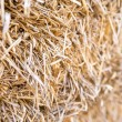 Hay — Stock Photo #31742889