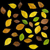 Autumn leaves over black background — Stock Photo