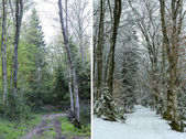 Diptych showing winter and spring in woodland — Stock Photo