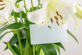 Bunch of white lilies whith blank card — Stock Photo
