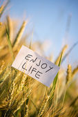 Enjoy life — Stock Photo