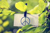 Peace concept — Stock Photo