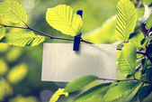 Blank white note paper hanging in green leaves — Stock Photo