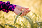 Young woman caressing ripening wheat — Foto Stock