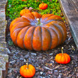 Fall Pumpkins — Stock Photo