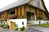 Girlander av majs på en slovenska lada — Stockfoto