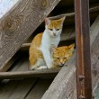 Cute Kittens on Barn Steps — Stock Photo