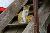 納屋のステップでかわいい子猫 — ストック写真