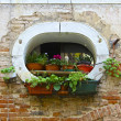 Unique Window and Potted Plants on Venice Building — Stock Photo #18892931