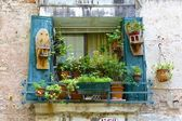 Bright Green Plants and Blue Shutters on Window — Stock Photo