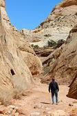Hiker in Capitol Reef National Park, Utah — Foto Stock