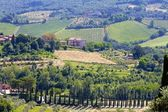 Vineyards and Cyprus Trees in Tuscany, Italy — Stock Photo