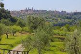 Montalcino, Italy — Stock Photo