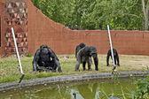 Primates, monkey, ape — Stock Photo