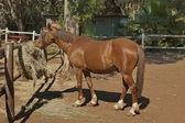 Race-horse in garden at Sun City — Stock Photo