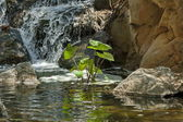 Small cascade waterfall by Palace of the Lost City hotel in Sun City — Stock Photo