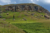Sedimentary rock and fern in Giants Castle KwaZulu-Natal nature reserve — Stock Photo