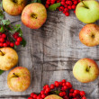 Stock Photo: Apples and mountain ash