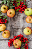 Apples and mountain ash — Stock Photo