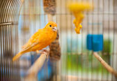 Beautiful parrot — Stock Photo
