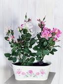 Home flowers — Stock Photo