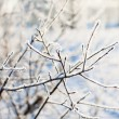 Stock Photo: Frosted branch with clear blue sky and shallow focus