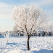 Stock Photo: Winter tree on winter field and blue sky