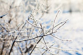 Frosted branch with clear blue sky and shallow focus — Photo