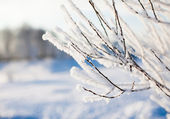 Frosted branch with clear blue sky and shallow focus — Stock Photo