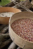 Beans drying in the sun according to farmer traditions — Stock Photo