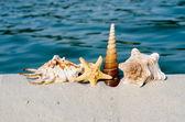 Seashell on the ocean — Stock Photo