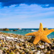 Stock Photo: Seastar on beach