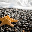Seastar on the beach — Stock Photo