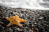 Seastar en la playa — Foto de Stock