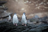 Zügelpinguin pinguine in der antarktis — Stockfoto