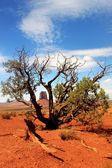 Monument Valley Navajo Tribal Park Arizona — Stock Photo