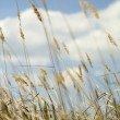 Sumer Grass — Stock Photo