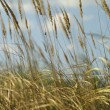 Sumer Grass — Stock Photo #12607276