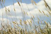Sumer Grass — Stock Photo
