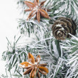 Spruce branches, pine cones and star anise — Stock Photo