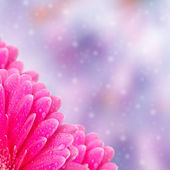 Abstract floral background with bokeh — Stock Photo