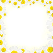 Camomile floral frame on a white background — Stock Photo