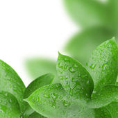 Frame of green leaves with water drops — Stock Photo