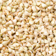 Buckwheat sprouts green background - Stock Photo