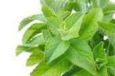 Branch of fresh mint isolated on white horizontal — Stock Photo