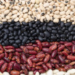 Assortment of different types of beans vertical — Stock Photo