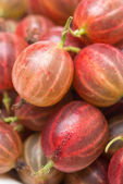 Red gooseberry close-up, selective focus — Stock Photo